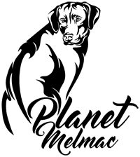 Hodowla Rhodesian Ridgeback