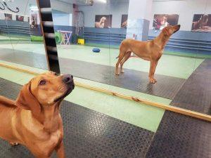 Treningi handlingowe z Zoopsycholog Agnieszką Penkala